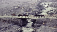 Horse convoy corssing a bridge at the remote Mustang District in Nepal. video