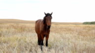 Horse eating grass on the field at summer time video