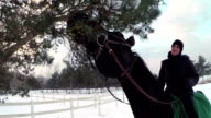 Horse eating spruce tree while riding in snow video