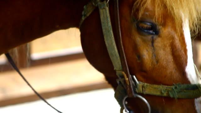 horse eye video