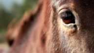 Horse face and eye closeup video
