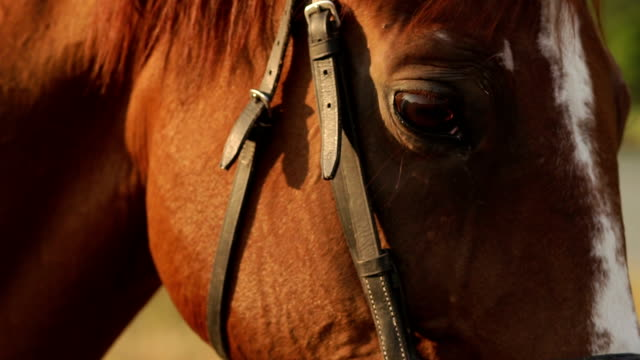 Horse face and eyes close-up in autumn background. video