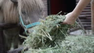 Horse feed by child, close up video