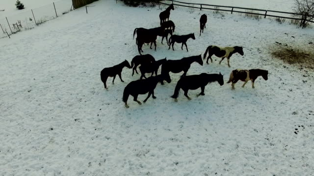 horse feeding throughout winter video