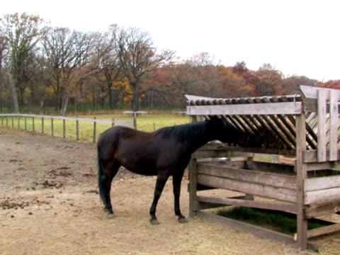 Horse Feeding video