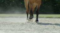 Horse frontal galop video