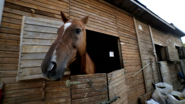 horse full hd - Stock Video video
