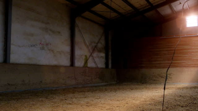 horse galloping in circles inside hall video