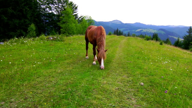 Horse Grazing in a Meadow. video