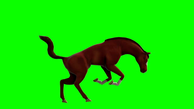 Horse Green Screen (Loopable) video