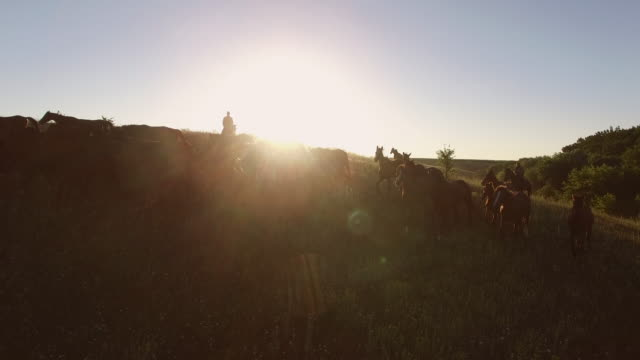 Horse herd is moving. video
