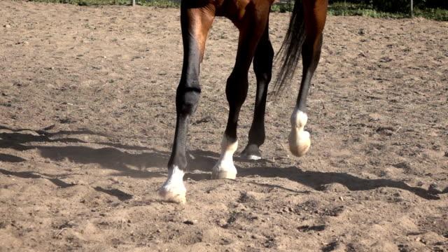 Horse hoof horseshoe slow motion video video