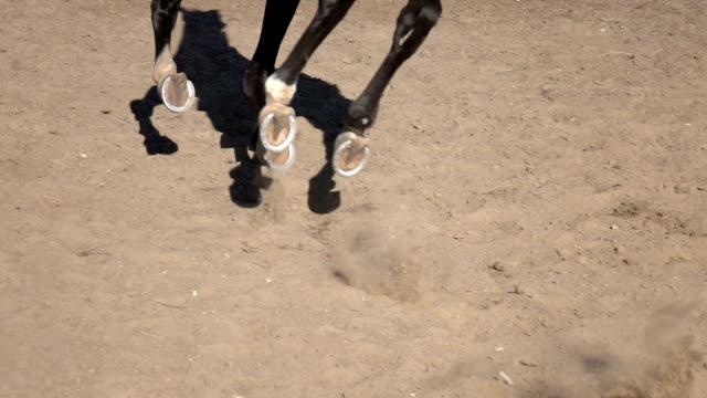 Horse hoof horseshoe video