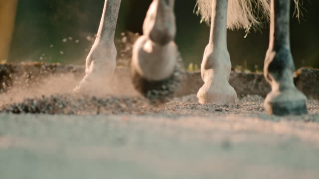 SLO MO Horse hooves kicking sand at sunrise video