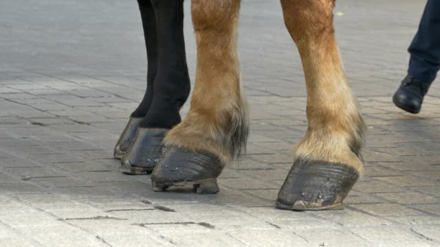 Horse Hooves on Pavement video