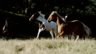 Horse in a meadow video