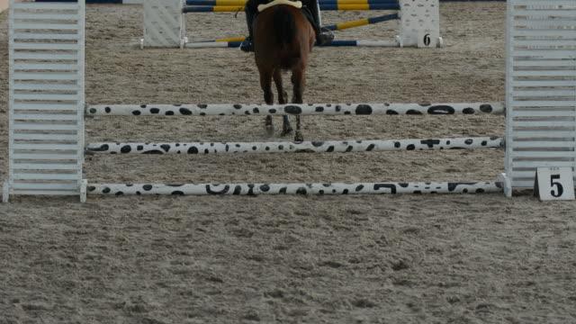 Horse in field video