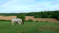 Horse in green video
