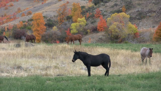 Horse in the fall with a donkey video