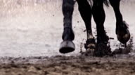 Horse is running in the rain video