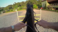 Horse jumping hurdle at sunset, gopro point of view video
