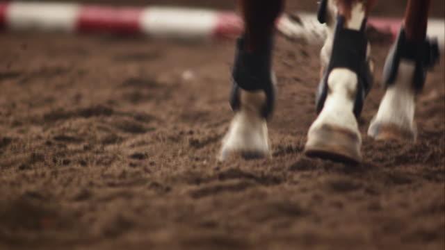 Horse kicking sand while running video