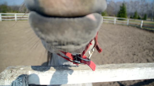 Horse mouth video