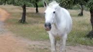 Horse nodding video