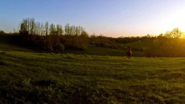 Horse on a farm video