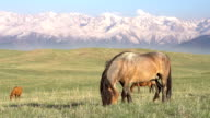 Horse on a hilly pasture video