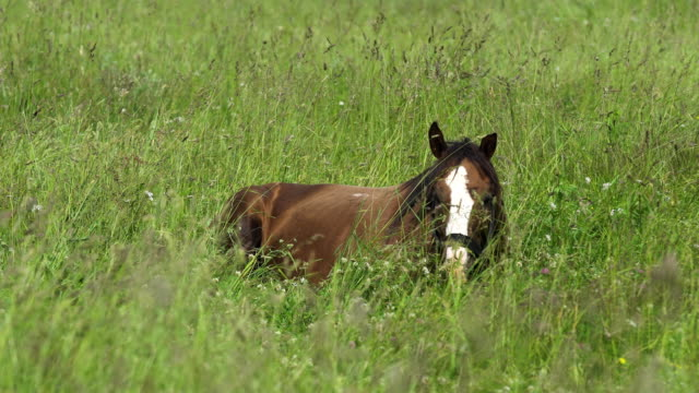 Horse on a summer pasture video