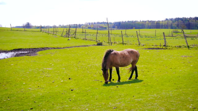 Horse on the field. video