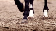 Horse pawing the ground video