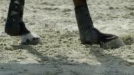 Horse paws jump video