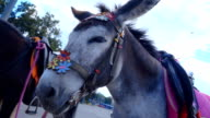 Horse pony amused, for which she received a scolding from the owner. Donkey standing in the street, waving his ears and waits for a client to ride. The horse is looking around and blinking eyes. Slow mo, slo mo video