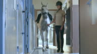 DS Horse rider leading a white horse into the box video