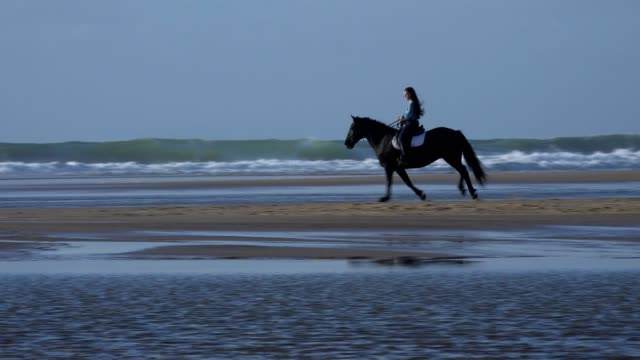 Horse riding on the beach at sunset video
