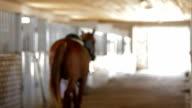 Horse Riding video