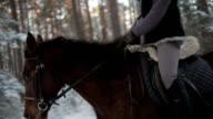 horse run through the woods video