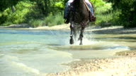 HD SLOW-MOTION: Horse running through water video