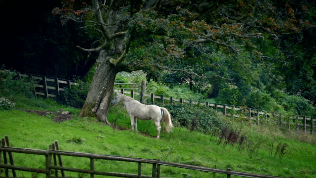 Horse Sheltering Under Tree In The Countryside video