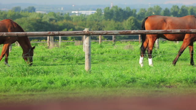 CRANE PAN: Horse video
