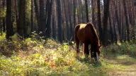 Horse. video