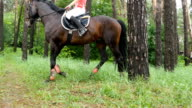 Horse walking in green grass at forest with female jockey video