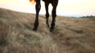 HD: Horse Walking Through Meadow video