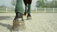 SLOW MOTION CLOSE UP: Horse walking towards camera in menage video