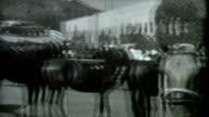 Horses 1930's Archival Film video