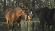 HD: Horses at home video