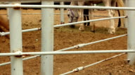 Horses Feeding Behind Fence in Corral video
