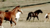 Horses galloping in the meadow video